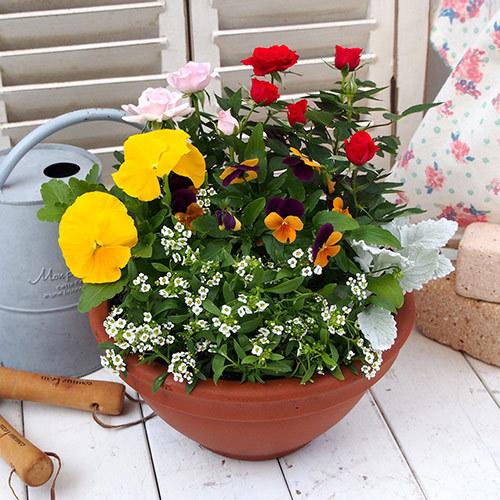 季節の寄せ植え 「スプリングナチュラルガーデン」