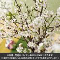 【バイヤー厳選】季節のお花・おまかせミックス「桜」