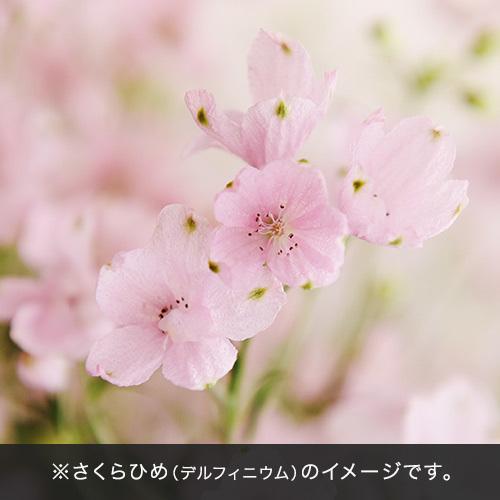 ドライフラワー「エテルネルフルール・さくらひめ」【沖縄届不可】