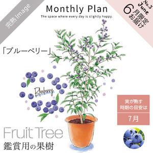 フルーツツリー 6月「ブルーベリー」