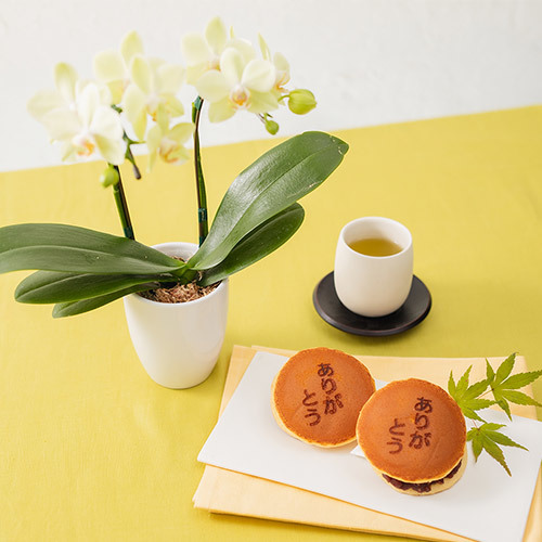 父の日 文明堂「ありがとうの焼印入り月三笠(5個入り)」とラン鉢のセット