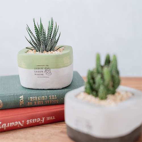 URBAN GREEN MAKERS セメントポット「セレウス・十二の巻」
