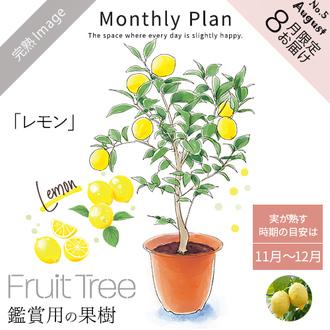 フルーツツリー 8月「レモン」