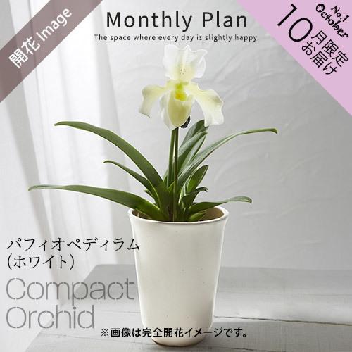 【日比谷花壇】ラン鉢「華やかオーキッドルーム 10月」
