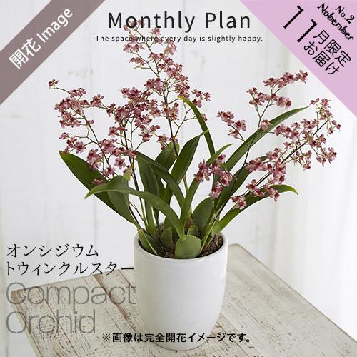 【日比谷花壇】ラン鉢「華やかオーキッドルーム 11月」