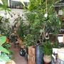 COTO tree HIBIYA KADAN 西武池袋店